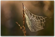spider's web Inspiration, Photography, Biblical Inspiration, Inspirational, Inhalation