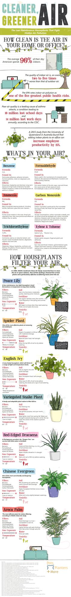Low Maintenance Houseplants That Fight Hidden Air Pollution If you want low-maintenance plants that will improve your air quality, take a look at these options! Cool Plants, Air Plants, Indoor Plants, Green Plants, Potted Plants, Air Cleaning Plants, Low Maintenance Plants, Environmental Health, Heating And Air Conditioning