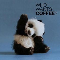 Forget the coffee, I'll just take that little guy!