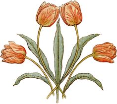 Pretty Vintage Tulips Illustration - The Graphics Fairy