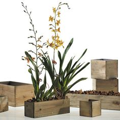 Rectangular wooden planter box The perfect accent planter box for any event. Gorgeous for holding flower centerpieces, favors, place card holders or vibrant fruit centerpieces. The simple and beautifu