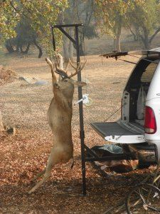 "Deer hunting | Kill Shot Game Hoist from DiscountRamps.com ""Customer Bags Black Tail Buck."""