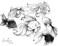 how to draw a goldfish - Google Search