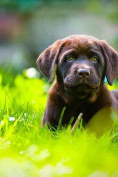 Stay in an Unfenced Yard #dogtips #dogtraining #stay #unfencedyard Dog Training Vest, Off Leash Dog Training, Therapy Dog Training, Training Collar, Therapy Dogs, Training Your Dog, Shock Collar, Dog Training Techniques, How To Train Your