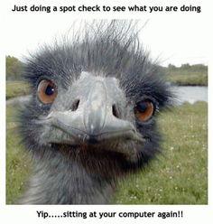 Ostrich checking