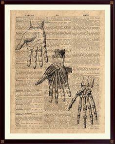Hand Anatomy Print, Human Hand Poster, Medical Decor, Hand Bones, Medical Art, Hand Skeleton by DicosLand on Etsy https://www.etsy.com/listing/278604382/hand-anatomy-print-human-hand-poster