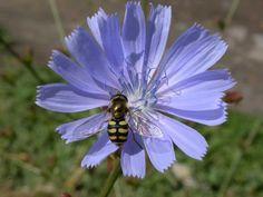 Пермакултура градина и езеро Insects, Bee, Animals, Honey Bees, Animales, Animaux, Bees, Animal, Animais