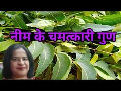 Medicinal benefits of Neem leaves/Neem leaves and Natural Nutrition. - YouTube Medicinal Plants, Agriculture, Plant Leaves, Medicine, Nutrition, Natural, Youtube, Healing Herbs, Medical