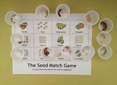 Montessori-inspired botany seed matching game.