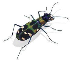 Insekten bilderlexikon online dating