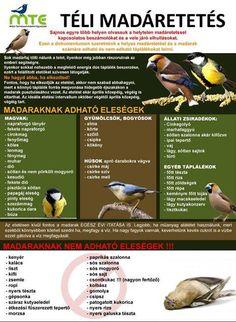 Képes hangulatjelentés - Index Fórum Feeding Birds In Winter, Tree Day, Nature Study, Cute Birds, Earth Day, Succulents Garden, Primary School, Permaculture, Amazing Nature