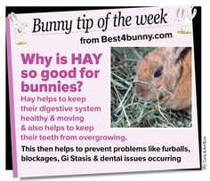 Bunny tip of the week - Why is hay so good for bunnies?