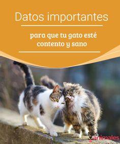 Datos importantes para que tu gato esté contento y sano  ¿Te preocupa la salud de tu mascota? te enseñamos algunos datos importantes para que tu gato esté contento y sano siempre. #salud #bienestar #datos #gato
