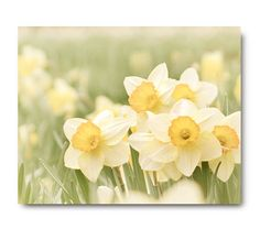 Daffodil Print Flower Photo nature print by semisweetstudios, $30.00