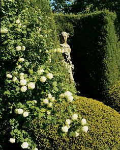 An 18th-century statue is shaded by viburnum and yew.