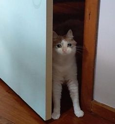 Cute Cat Memes, Funny Animal Memes, Funny Animal Pictures, Funny Cats, Funny Animals, Cute Animals, Funny Memes, I Love Cats, Cute Cats