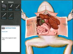 This iPad app is suitable for middle-school students who are learning about organs and organ systems as part of their life science curriculum. Students can try dissecting a virtual specimen with all the trappings that come with the real procedure-minus the mess of course!