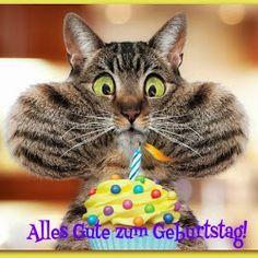 Lustige Katze mit Geburtstagstorte: Alles Gute zum Geburtstag!