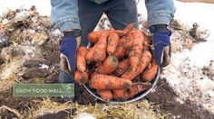 Winter carrots are worth the wait. Sweeter than any other kind, and easy to grow! Organic Recipes, Ethnic Recipes, Starting A Vegetable Garden, Unique Gardens, Garden Photos, Tandoori Chicken, Chicken Wings, Carrots, Gardening