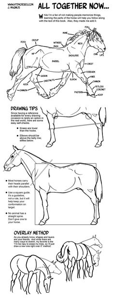 Pencil Drawing Techniques Horse Anatomy Part III - All Together Now by sketcherjak on DeviantArt by Bali Drawing Lessons, Drawing Techniques, Drawing Tips, Painting & Drawing, Horse Drawing Tutorial, Horse Drawings, Animal Drawings, Horse Anatomy, Animal Anatomy
