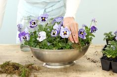 Planted Pansies Centerpiece.