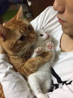 真っ白な子猫を抱っこして離さない茶トラwwwwwww