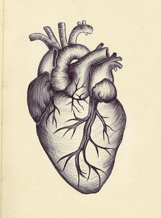Vintage anatomical heart drawing google search art pinterest anatomical heart drawing ahd05 ccuart Choice Image