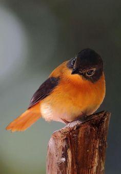 Pretty birdie...