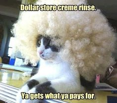 Humorous cats and kittens, cat humour. For the funniest kitties images as well as quotes see www.funnyjoke.lol