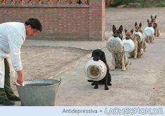 Besser erzogen als Lachschoner - Hunde,Linie,Reihe,Fütterung,Schale,erziehung,Dogs,Wohlerzogen,Hund,Dog,Essen,Mahlzeit,Disziplin