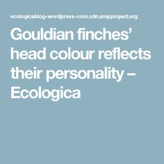 Gouldian finches' head colour reflects their personality – Ecologica