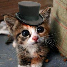 #Cats #Cat #Kittens #Kitten #Kitty #Pets #Pet #Meow #Moe #CuteCats #CuteCat #CuteKittens #CuteKitten #MeowMoe Dashing! ... http://www.meowmoe.com/42874/