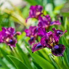 Цветы почтой харьков, цветы саратов недорого заводской район