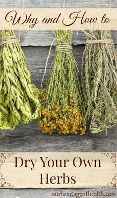 Why and how to dry your own herbs | http://ourheritageofhealth.com