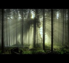forest sunbeams by Bill Hinton Photography, via Flickr