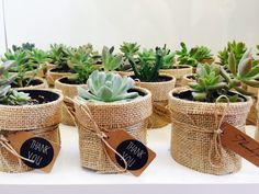 70 new ideas for succulent favors wedding etsy Succulent Wedding Cakes, Succulent Wedding Favors, Cactus Wedding, Succulent Gifts, Succulent Centerpieces, Succulents Diy, Wedding Favours, Wedding Gifts, Wedding Flowers