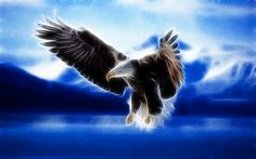 #Live #Life #Right, Stay #Elevated, Stay #High. That is #How You #Fly. #Eagle #quote #carlthemuse