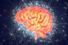The Neuroscience of Creativity: A Q&A with Anna Abraham Pair Programming, Book Creator, Harvard Business Review, Scientific American, Beautiful Mind, New Things To Learn, Neuroscience, Creative Thinking, Creativity