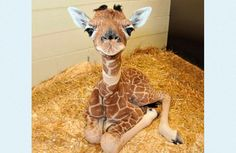 Some baby animals to lift your spirits.Some baby animals to lift your spirits.Some baby animals to lift your spirits.Some baby animals to lift your spirits. Zoo Animals, Cute Baby Animals, Animals And Pets, Funny Animals, Animals Photos, Nature Animals, Funny Pets, Small Animals, Wildlife Nature