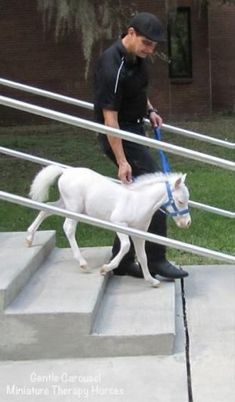 Gentle Carousel provides miniature therapy horses which provide trauma victims and patients in assisted living facilities, hospitals and hospice care http://mashable.com/2015/09/18/miniature-therapy-horses/?utm_cid=mash-com-pin-link