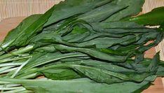 Ce este, de fapt, LEURDA. Mai mănânci vreodată această plantă? Wild Garlic, Good To Know, Health And Beauty, Natural Remedies, Spinach, Herbs, Vegetables, Eat, Cooking