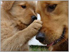 4 Dog Puppy Golden Retriever Dogs Puppies Greeting Notecards/ Envelopes Set. $6.99, via Etsy.