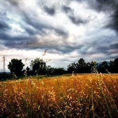 L'oro dei campi