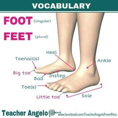 the body - foot - English Teaching Materials, Teaching English Grammar, English Writing Skills, English Language Learning, English Vocabulary Words, English Phrases, Learn English Words, English Study, English Lessons