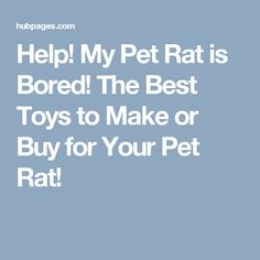 Help! My Pet Rat is Bored! The Best Toys to Make or Buy for Your Pet Rat!