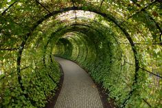 This beautiful tunnel of green ivy doesn't lead to a place you would expect. Located in the Alnwick Garden of Northumberland and operated by the Duchess (of Northumberland), this gorgeous tunnel leads visitors to the locked gates of the Poison Garden. Covered Walkway, Covered Garden, Garden Art, Garden Design, Poison Garden, Alnwick Castle, Landscape Architecture, Green Architecture, Garden Inspiration
