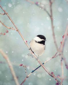 Het Decor van de winter Winter foto vogel foto Winter
