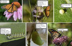Heel eenvoudig strips maken met bestaande foto's