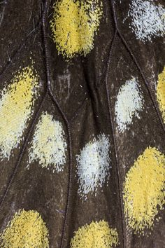 Moth Wings, Insect Wings, Butterfly Wings, Beautiful Butterflies, Textile Patterns, Animal Kingdom, Art Reference, Mustard, Paintings