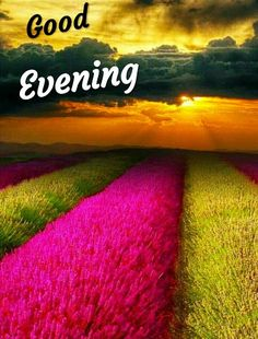 Photos Of Good Night, Good Night Love Images, Beautiful Love Pictures, Good Night Image, Good Morning Images, Good Evening Messages, Good Evening Wishes, Good Evening Greetings, Good Evening Love